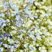 Beautiful spring background from flowers — Stock Photo