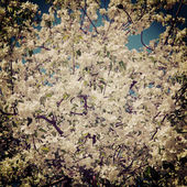 Branch of a blossoming tree with a retro effect — Stock Photo