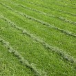 Mown green grass field — Stock Photo #40136299