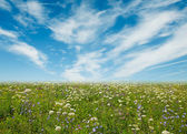 Wildflower meadow and blue sky as a background — Stock Photo
