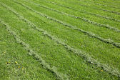 Mown green grass field — Stock Photo