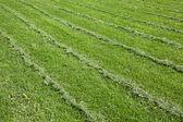 Mown green grass field — Stock Photo