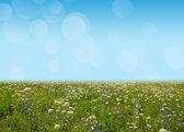 Wildflower meadow and blue sky as a background — Foto Stock