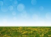 Dandelion field and blue sky as a background — Stock Photo