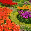Beautiful tulips in a botanical garden — Stock Photo #40205079
