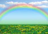 Dandelion field, blue sky and rainbow as a background — Stock Photo