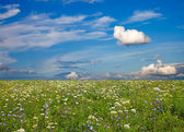 Wildflower meadow and blue sky as a background — 图库照片