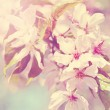 Sakura flowers branch. Vintage retro style — Stock Photo