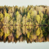 Spring forest is reflected in the river — Stock Photo