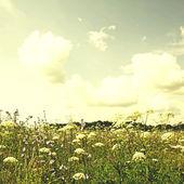 Fleurs sauvages prairie et bleu ciel, style rétro vintage — Photo