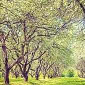 Tak van een bloeiende boom met witte bloemen — Stockfoto