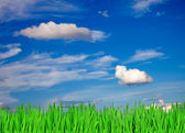 Green grass and blue sky as a background — Foto de Stock