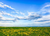 Panorama of a meadow with a wildflowers and the blue sky — Foto de Stock