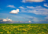 Wildflower meadow and blue sky as a background — Stockfoto