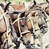 лошади в конюшне — Стоковое фото