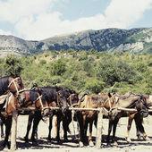 Hästar i stallet — Stockfoto