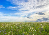 Wildflower meadow and blue sky — Stockfoto