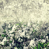 Branch of a blossoming tree with white flowers — Stock Photo