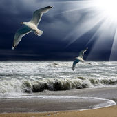 Seagulls flying on sea background and sun ray through clouds — ストック写真