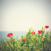Poppy flowers in the sky. Vintage retro style — Zdjęcie stockowe