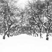 Noche de invierno. estilo retro vintage — Foto de Stock