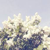 Branch with spring lilac flowers. Vintage retro style — Foto Stock