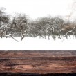 Winter forest and empty old wooden deck table. Ready for product display montage — Stock Photo #47883127