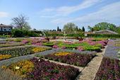 цветы в ботаническом саду — Стоковое фото