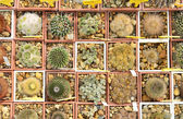 A collection of cactuses in a cactus garden — Stock Photo