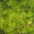 Mossy cover of vegetation — Stock Photo