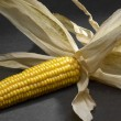 Stock Photo: Open corn cob