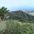 Stock Photo: La Gomera