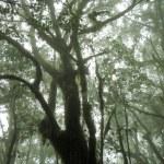 Laurel forest — Stock Photo