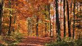 秋季森林风光 — 图库照片