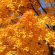 Stock Photo: Orange treetop