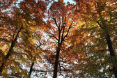 Colorful treetops — Stock Photo