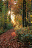 Autumn forest scenery — Stock Photo