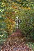 Autumn forest scenery — Stock Photo