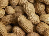 Peanuts — Stock Photo