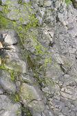 Dettaglio roccioso — Foto Stock