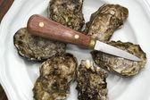 Oysters on plate — Stock Photo
