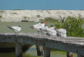 Водоплавающих птиц на Пирс — Стоковое фото