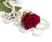 Rose with a beads — Stock Photo