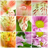 Collage of macro shots of flowers — Stock Photo