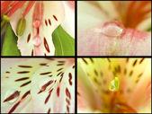 Collection. orchidées de macro — Photo