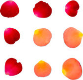 A collection of rose petals — Vettoriale Stock