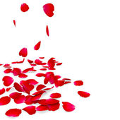 Petals of roses fall on a floor — Stock Photo