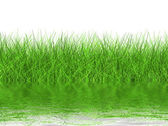Green grass on a white background — Stock Photo