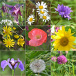 Collage full of wild flowers — Stock fotografie