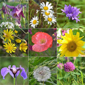 Collage full of wild flowers — Stock Photo